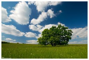 Trio by one-shot-below
