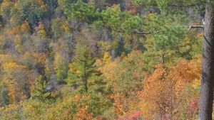 Canyon in Fall 7 by ToshirotheKnightWolf