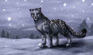 Snow Leopard by Cederin