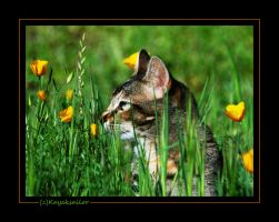 Stop to smell the poppies by kayaksailor