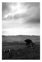 Levels and cows by Tom-Mosack