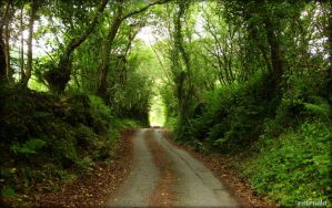 Cornish Country Lane by Estruda