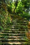 Stairway to Jungle by ewertonlima