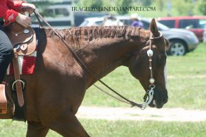 Quarter Horse Stock 105 by tragedyseen