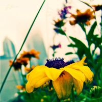 City Flowers One by rekit