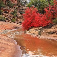 Clear Creek...Zion N.P. by ernieleo
