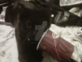 Even cats love tim hortons by therealmavisdracula