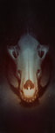 Wolf Skull by dreamhome