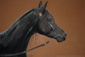 Black arabian horse - Pastel by BLACKNIGHTINGALE81