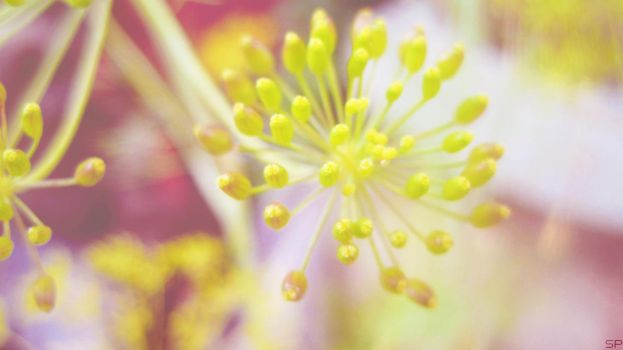 *Tiny Bunches* by Sparkle-Photography
