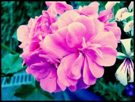 Pink by Usherette