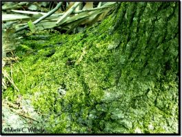 Moss Blanket by MariaWillhelm