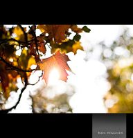 Sun, Cold, Autumn by Kenwagnerphoto