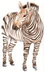 Zebra by purplegoosey