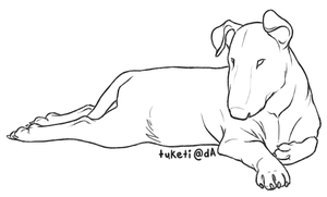 Free Lines - English Bull Terrier by tuketi
