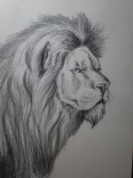 Lion by yvax
