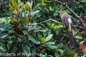 Resting on a Branch by WeaselTea