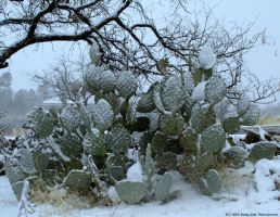 Arizona Snowstorm (II) by RisingFireArizona