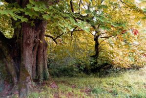 Trees 11 by cemacStock
