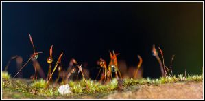 Small Woods I by jmorante77