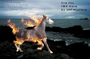 Fire Fox twh mare made for smf by HlsRoger