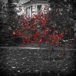 Red Tree by MarinaManky