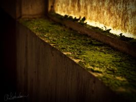 Moss covered window by sokolovic1987