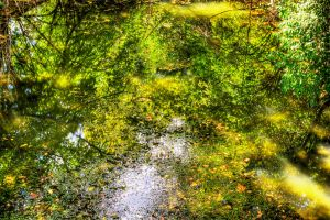 Reflected Distortion by Elva-Luthien