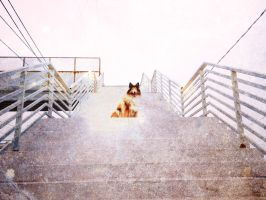 Stairs to a Star by hermio