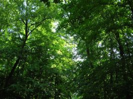 Emerald Canopy by Theophilia