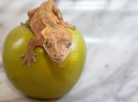 Latest Addition -Red Bi-Color Crested Gecko - 5161 by creative1978