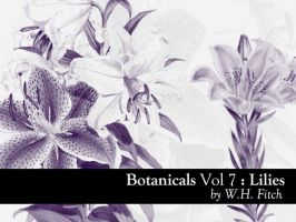 Botanicals 7 - Lilies by remittancegirl