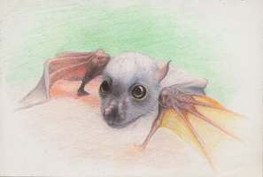 Obi the baby Eastern Tube-Nosed bat by shanskala