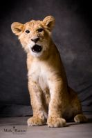 Simba the lion cub by Film-Exposed