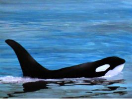 Orca by jhull1
