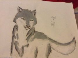 Grey Wolf drawing by TheSkylar