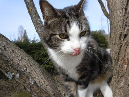 My cat Roope by ElectricRosez