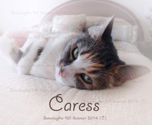 Caress by Sisterslaughter165