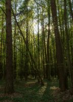 Spring forest 1 by Isyala