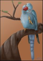 Mylo - Indian Ringneck Parrot by PsittaDragon