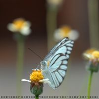 Butterfly by DConnor