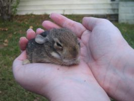 Baby Bunny 3.:Stock:. by SparrowsFlame-Stock
