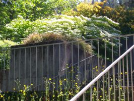 Stairs and Flowers by cowgirlscholar