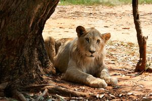 Lions Park - South Africa 1 by misszoe