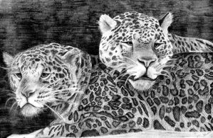 Leopards by Patryn-Sartan