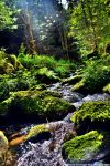 Follow the Stream II by DavidGrieninger