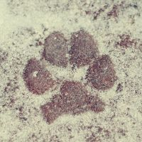 Paw by BlueColoursOfNature