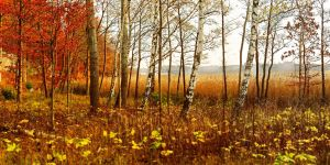 Sweden autumn...02 by Pharaun333