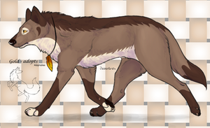Wolf adopt closed by gold-adopts