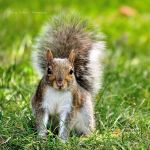 Squirrel by christycameasromans